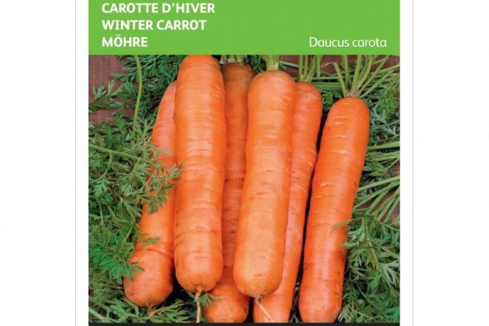 Berlikumer  winterwortel
