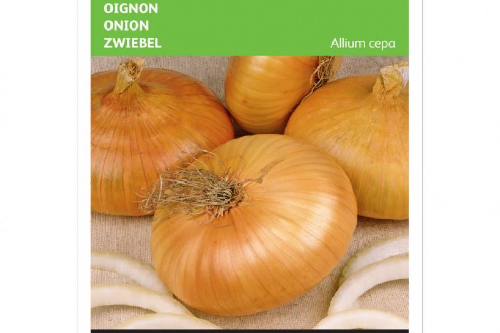 Onion yellow flat dutch