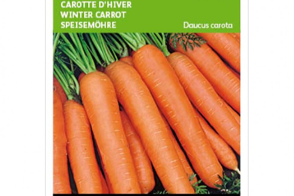 Winter carrot autumn king