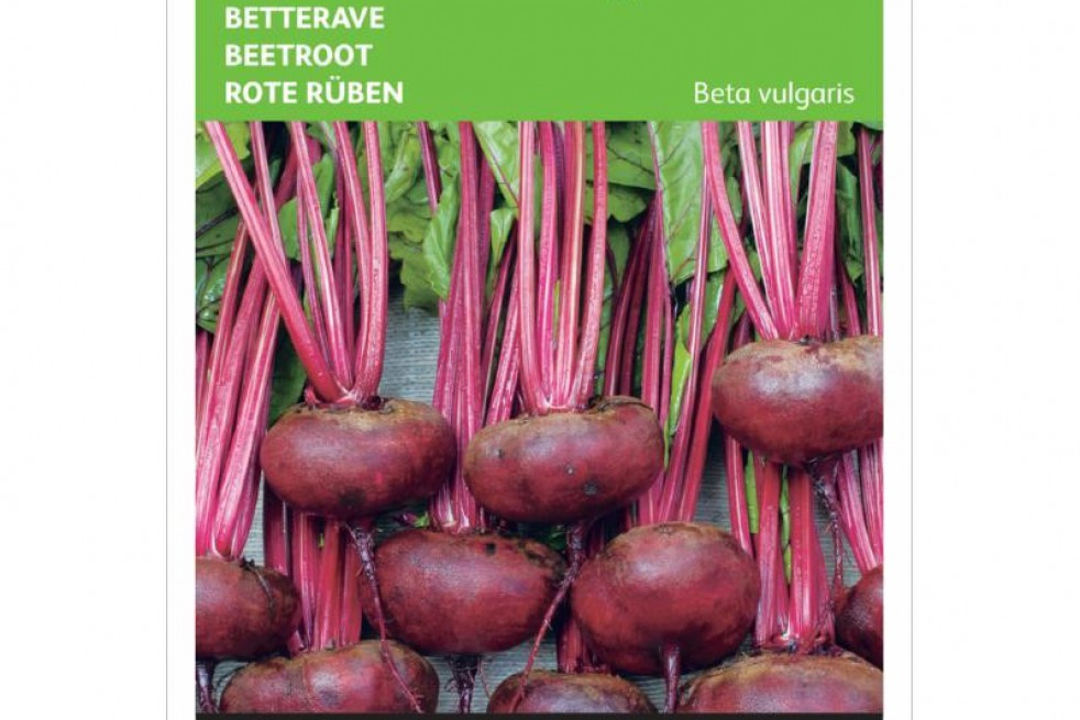Egyptian Turnip Rooted Beetroot