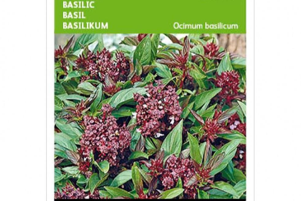 Basilic de Thailande Siam Queen