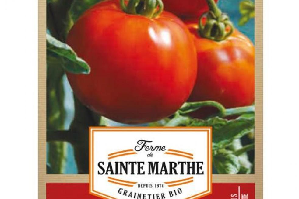 Tomato Reine de Sainte Marthe
