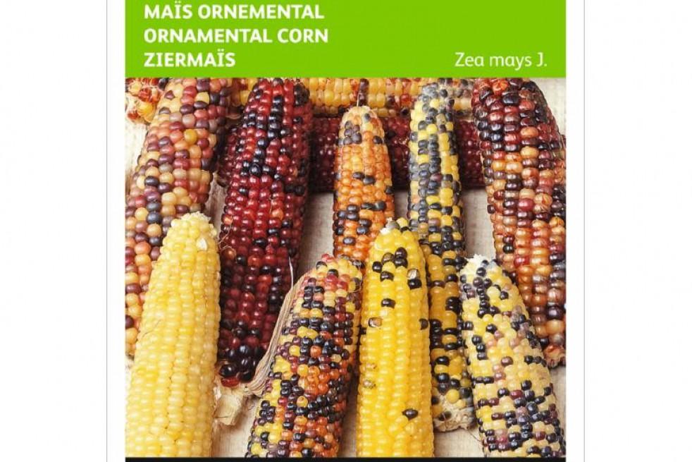Maïs à épis multicolores