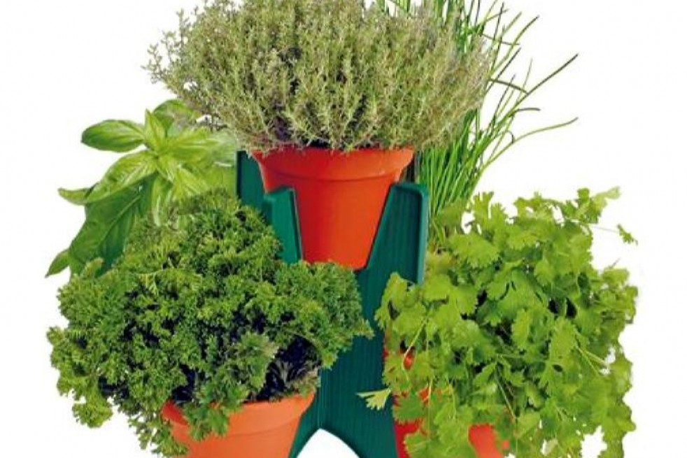 Growing kit of five aromatic plants