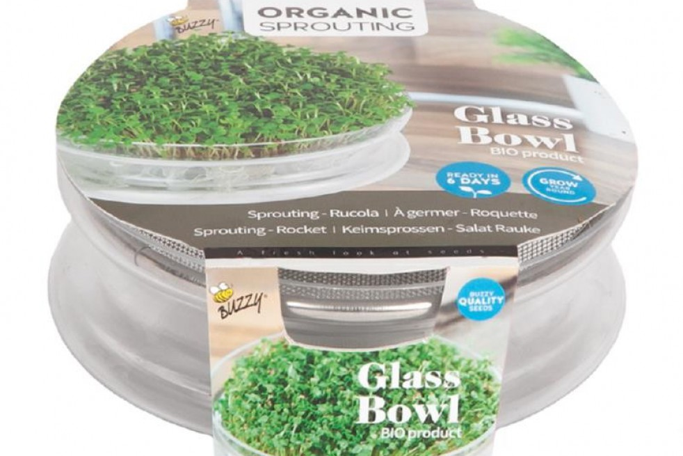 Sprouting glass jar with seeds of rucola to sprout