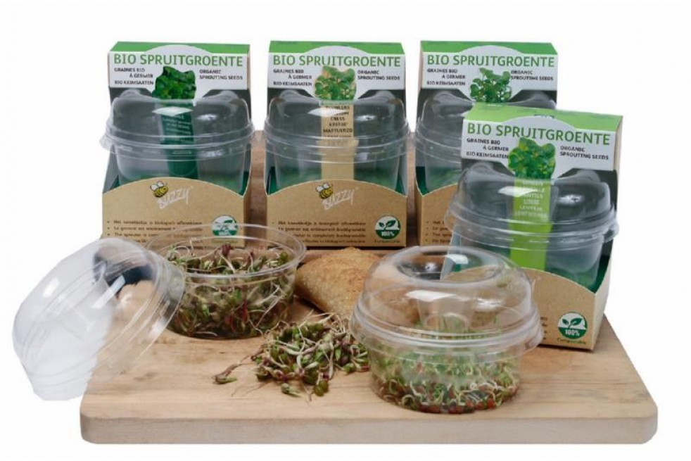 Germoir avec semences à germer de radis