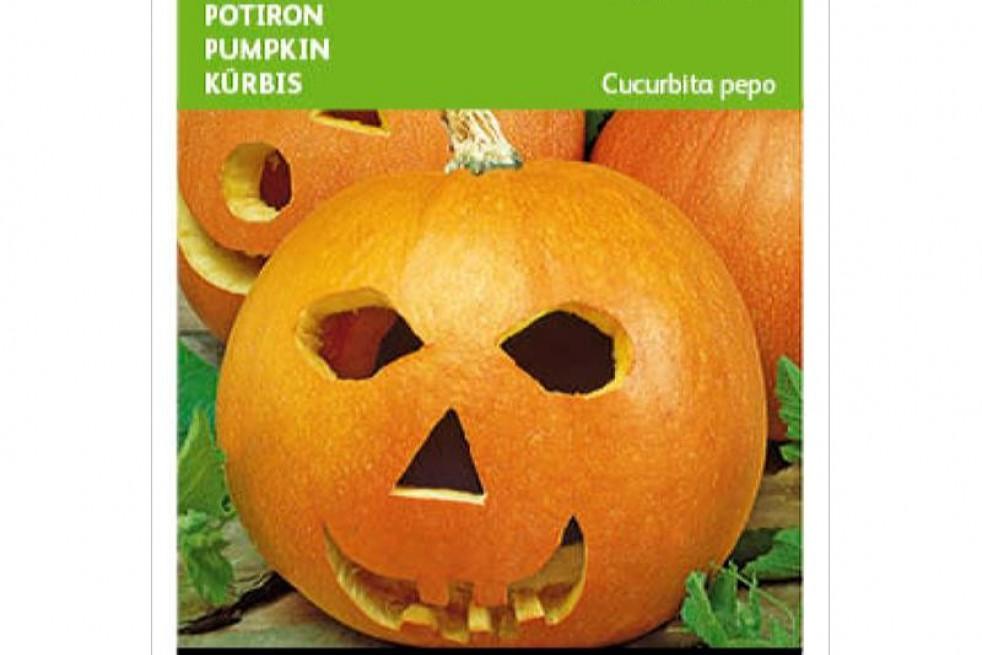 Haloween Pumpkin Jack O Lantern