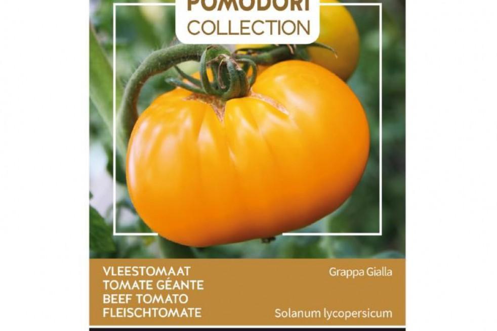 Tomate Eau-de-Vie géante jaune - Grappa Gialla