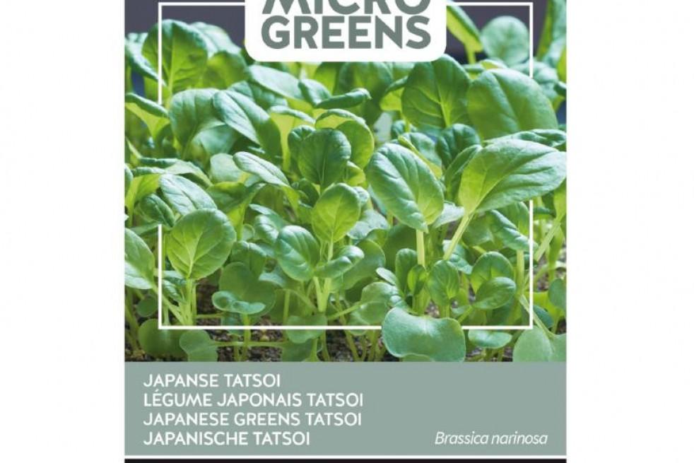 Tatsoi - Japanese Greens