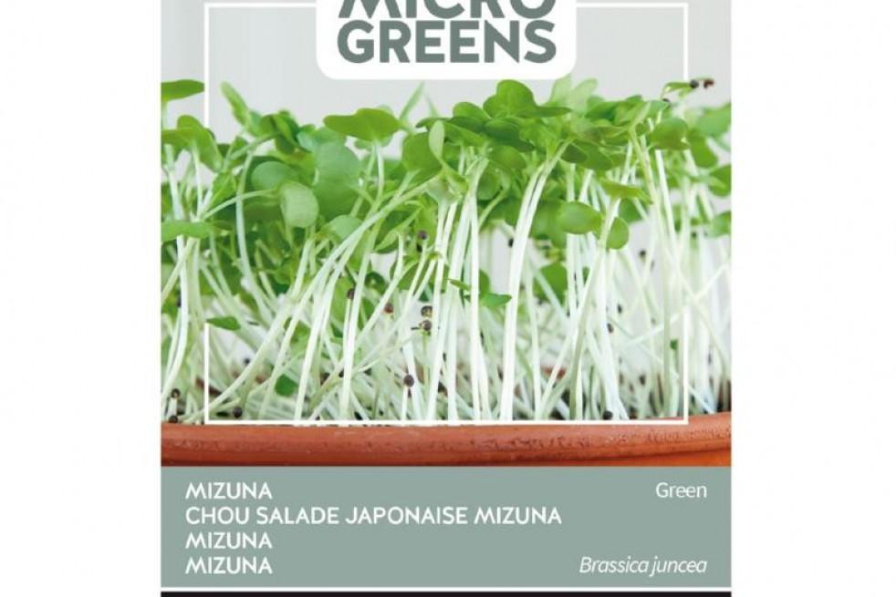 Mizuna à feuille verte