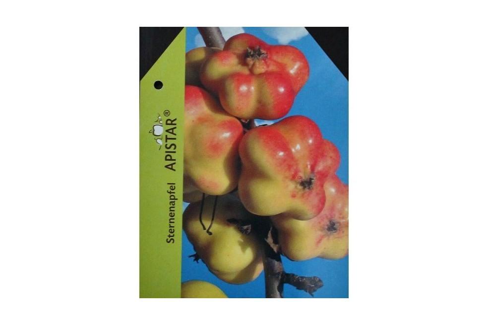 Apistar® apple tree