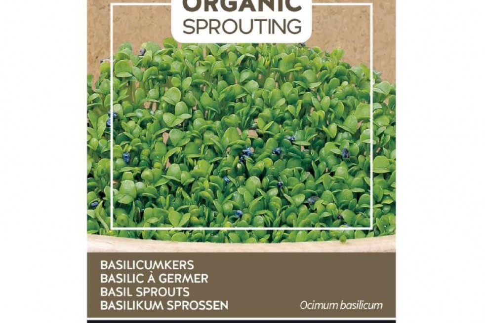 Basil to sprout, Organic