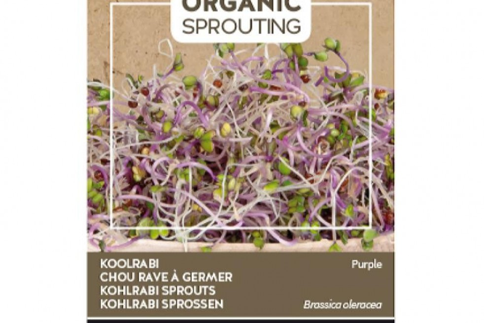 Purple kohlrabi to sprout, organic