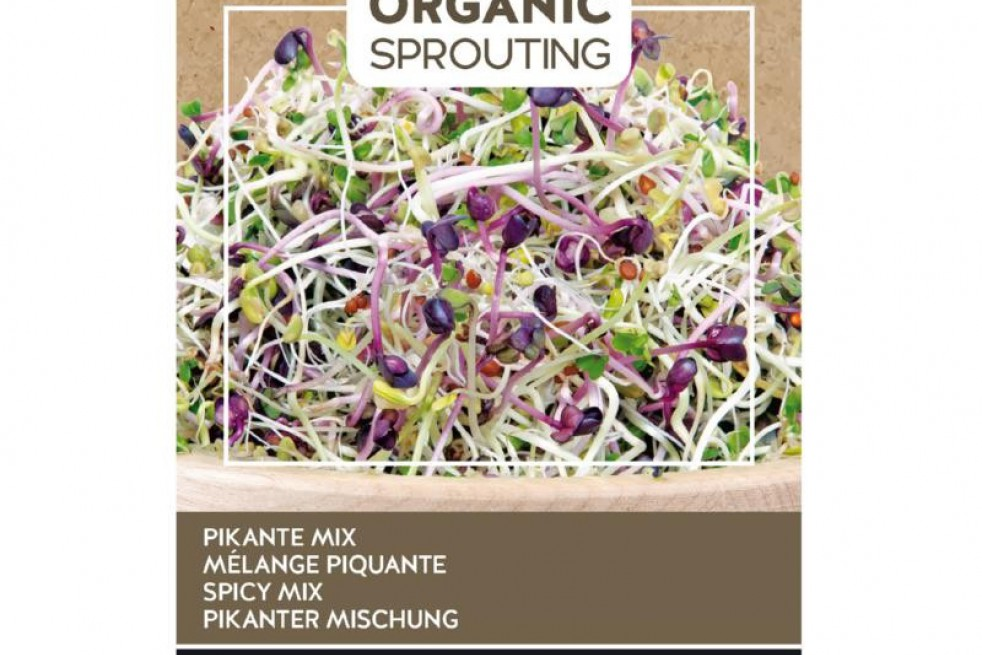 Mix of Spicy Salads to sprout, organic