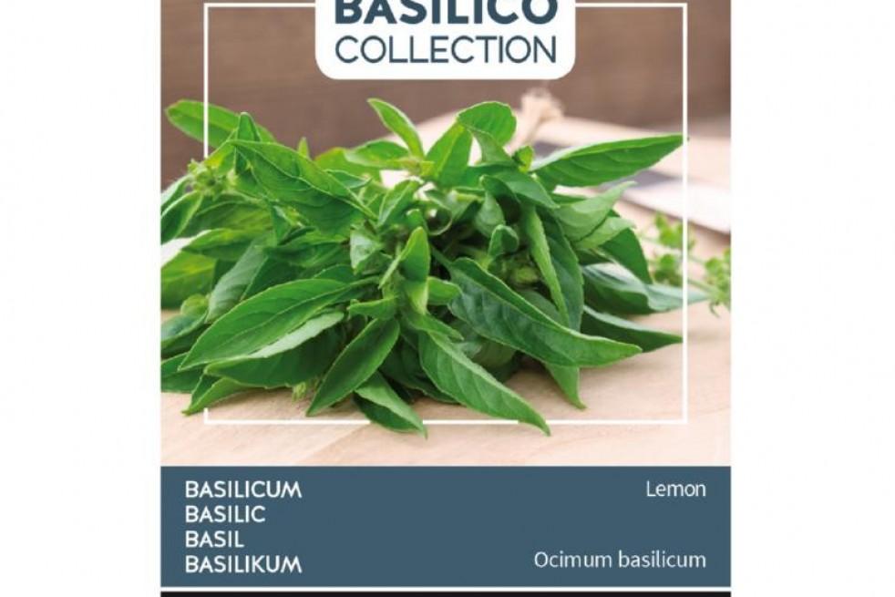 Basilic Citron