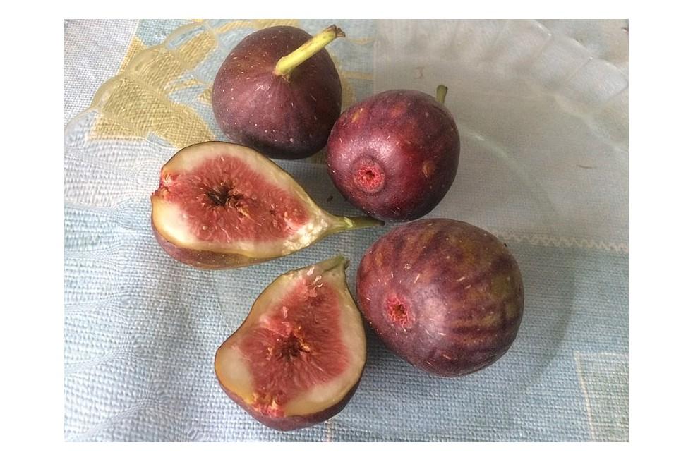 Fig tree Brown Turkey (Javier martin, CC BY-SA 4.0 , via Wikimedia Commons)