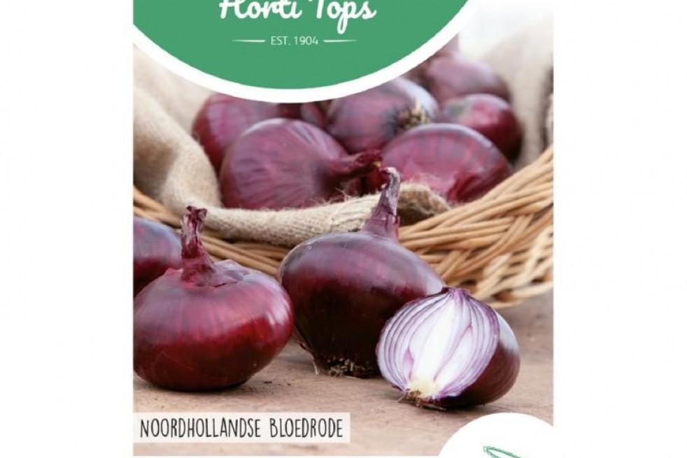 Onion Noordhollandse Blood Red