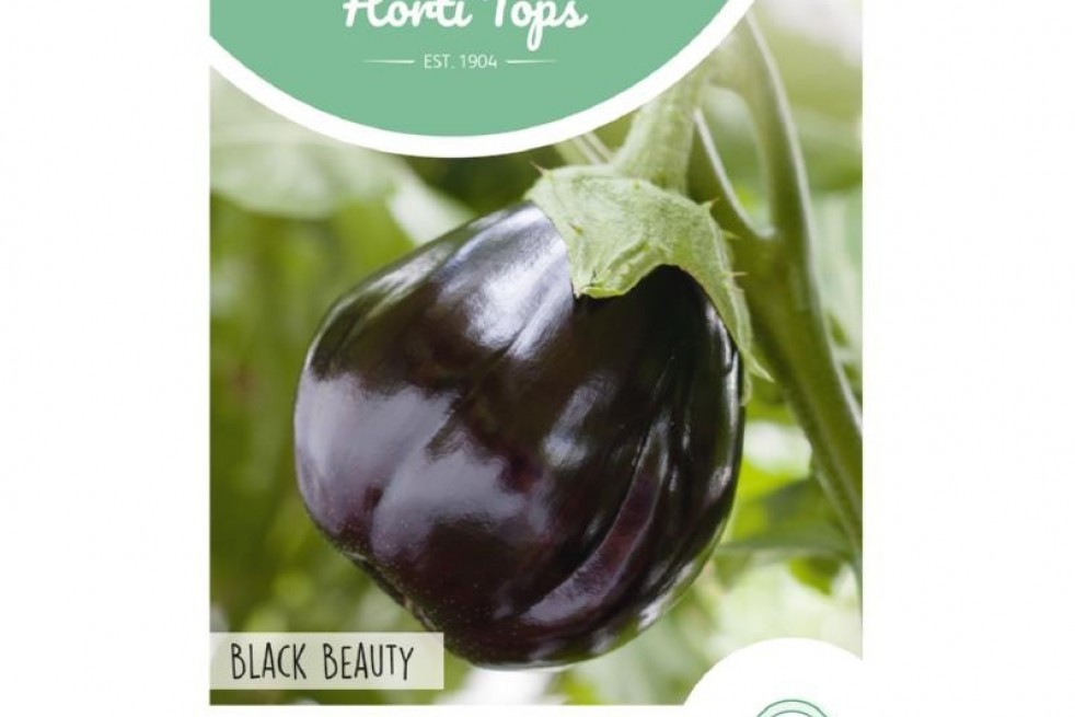 Aubergine ronde Black Beauty