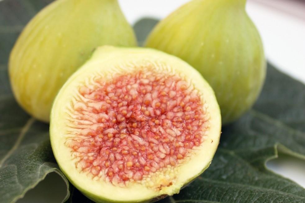 Fig tree Col de Dame Blanche