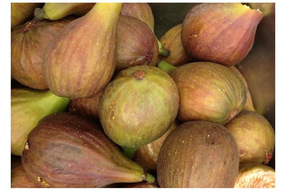 Fig tree Grise de Saint Jean