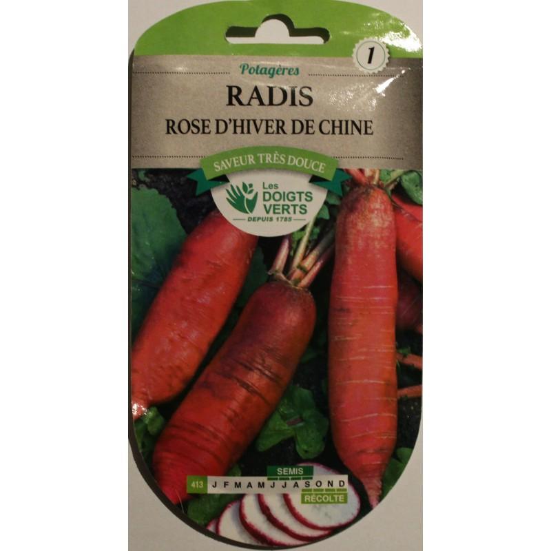 Radis rose d 39 hiver de chine raphanus sativus - Radis rose de chine ...