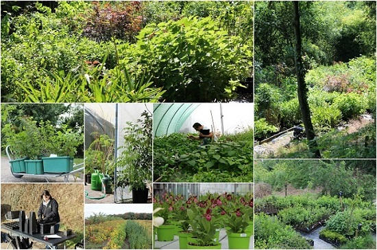 Jardinerie en ligne vente arbres et arbustes jardins for A propos du jardin