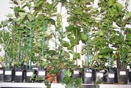 Emballage des plantes